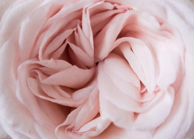 A Feminine Flower.